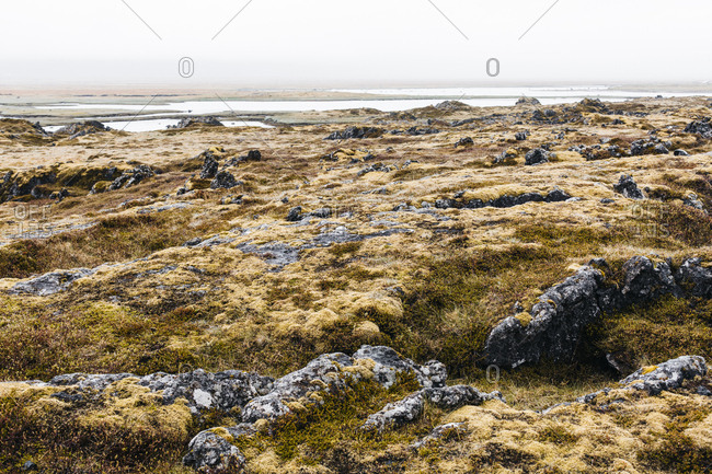 Lava field covered in moss in west Iceland