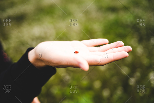Colorful tiny lady bird crawling on tender hand of girl in black outside.