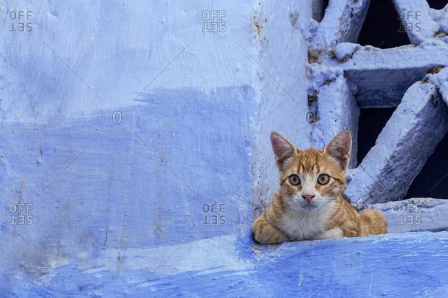 Chaouen the blue city of Morocco, streets, doors, windows, details and cat