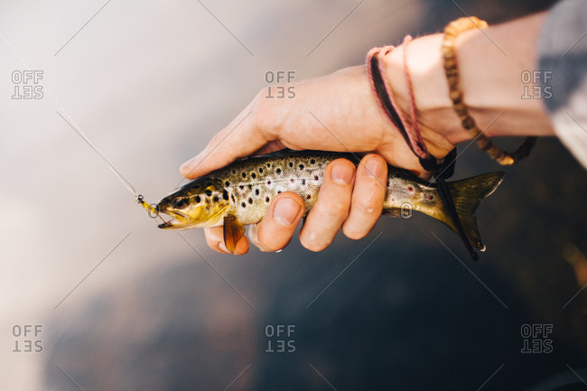 The fisherman hand with baubles holding small hooked fish with pierced fishing line