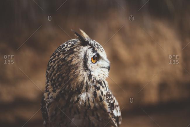 Owl sitting in autumn nature