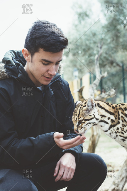 Young man feeding leopard cat from hand in the zoo.