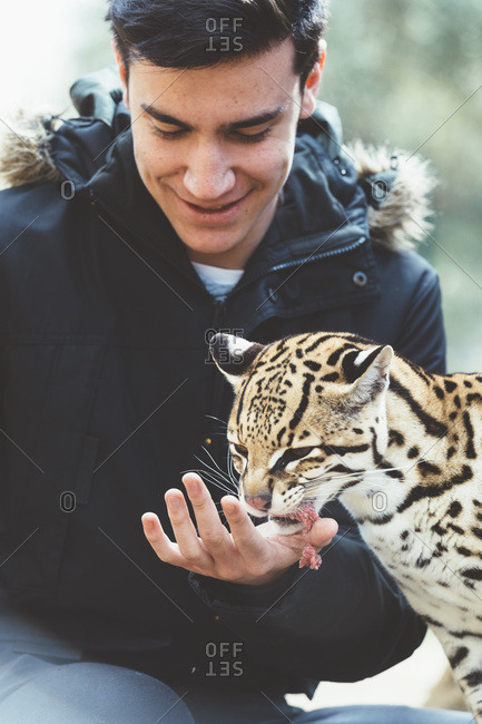 Man feeding leopard in zoo