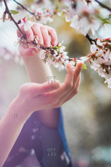 Hand touching blooming branches - Offset