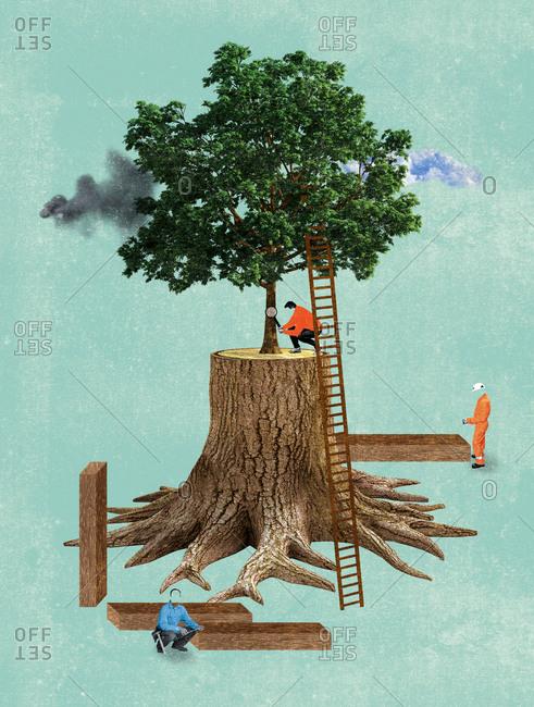 Men working around tree growing from tree stump