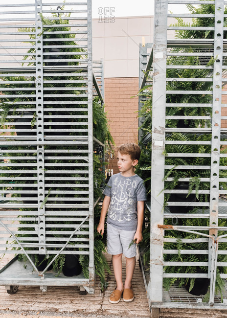 Portrait of a young boy standing by ferns for sale