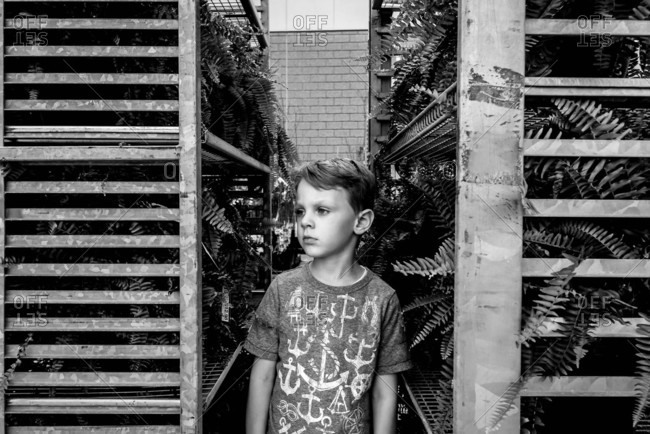 Portrait of a young boy standing by ferns in black and white