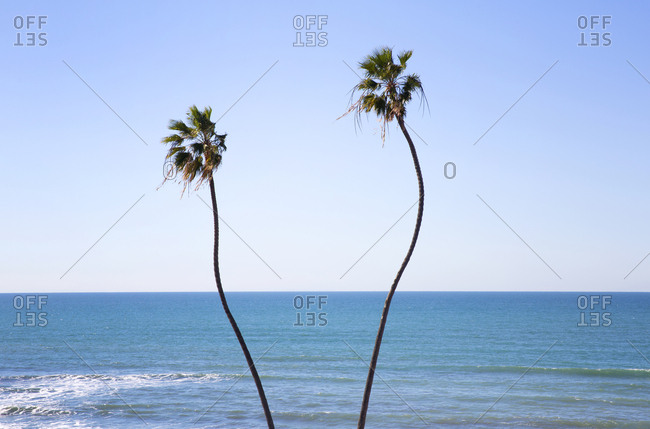 Palm trees on a beach in Los Angeles, California