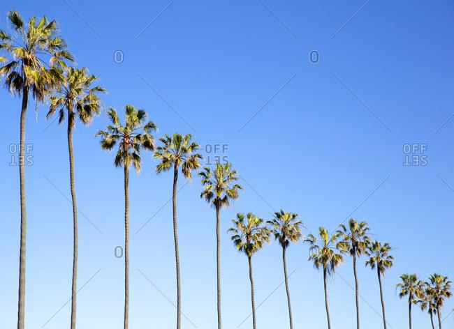 Palm trees on a La Jolla beach in Los Angeles, California