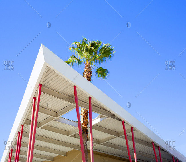 Palm tree growing through roof, Palm Springs, California