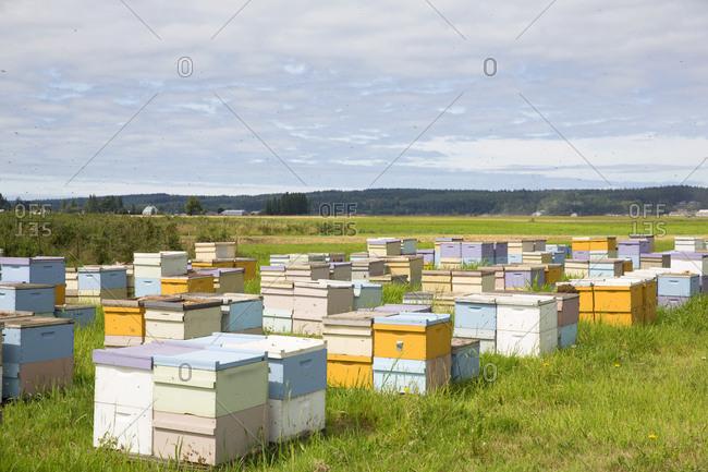 La Conner, Washington, USA - July 2, 2016: Bee hives on farmland