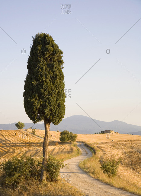 Country road at sunset near Siena, Italy