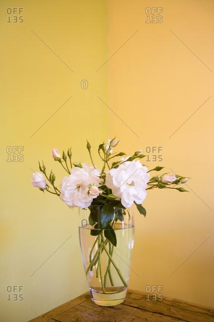 Roses in a vase - Offset