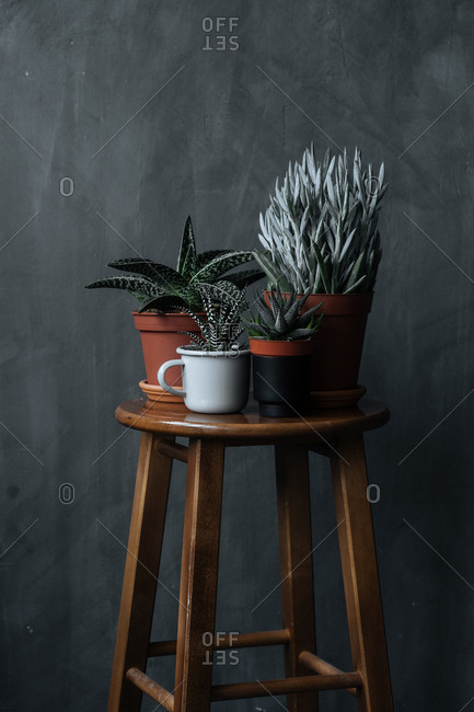 Close up of a variety of aloe plants on a stool