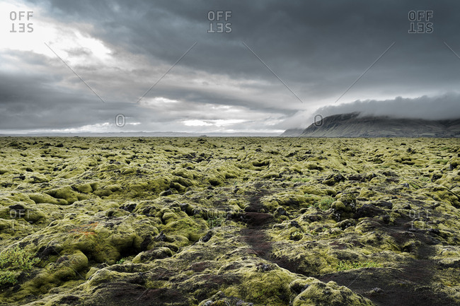 Iceland- Kirkjubaejarklaustur- Dverghamrar- Field of lava overgrown with moss