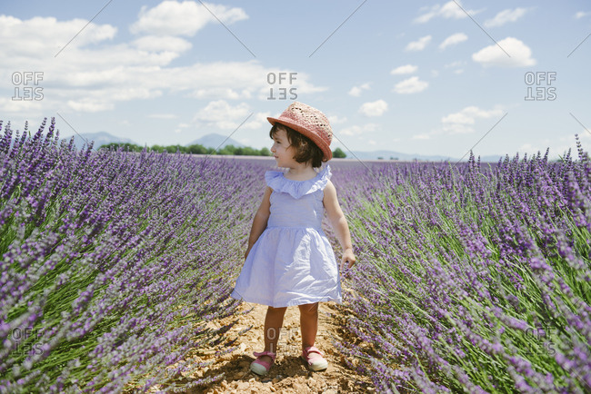 France- Provence- Valensole plateau- toddler girl standing in purple lavender fields in the summer