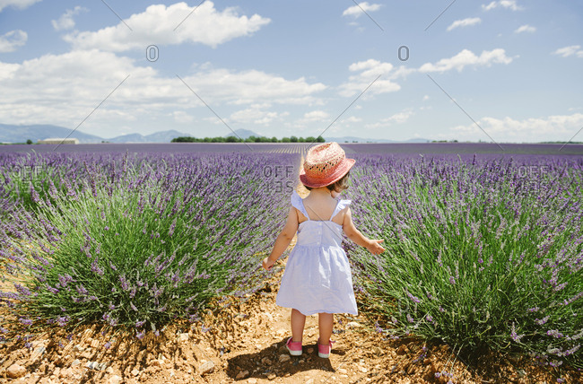 France- Provence- Valensole plateau- rear view of toddler girl standing in purple lavender fields in the summer