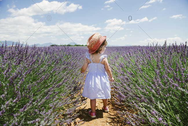 France- Provence- Valensole plateau- rear view of toddler girl in purple lavender fields in the summer