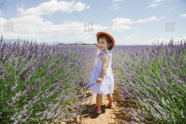 France- Provence- Valensole plateau- Happy toddler girl standing in purple lavender fields in the summer
