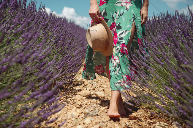 France- Provence- Valensole plateau- Barefoot woman walking among lavender fields in the summer