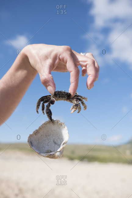 Hand holding crab- holding shell