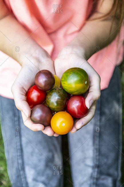 Girl holding colorful tomatoes in hand