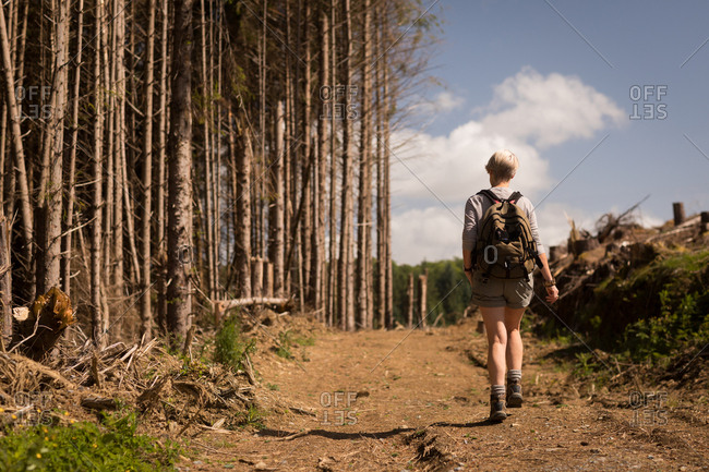 Rear view of woman walking in the forest on a sunny day