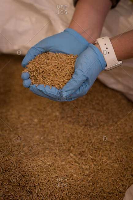 Close-up of female worker checking grains at warehouse