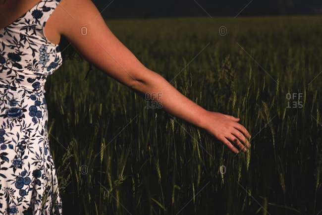 Mid section of woman touching crop in the field