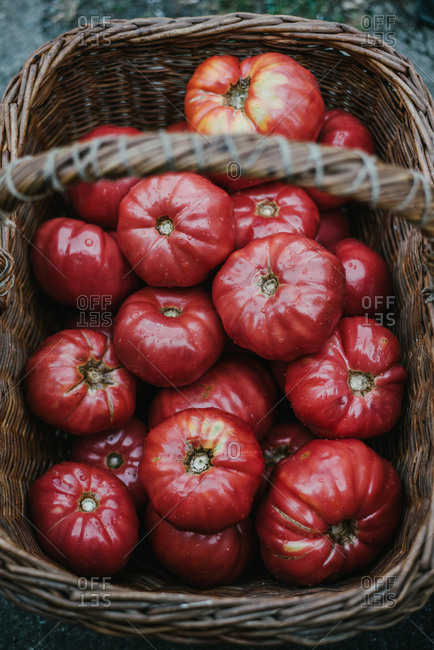Fresh organic tomatoes in a old traditional basket