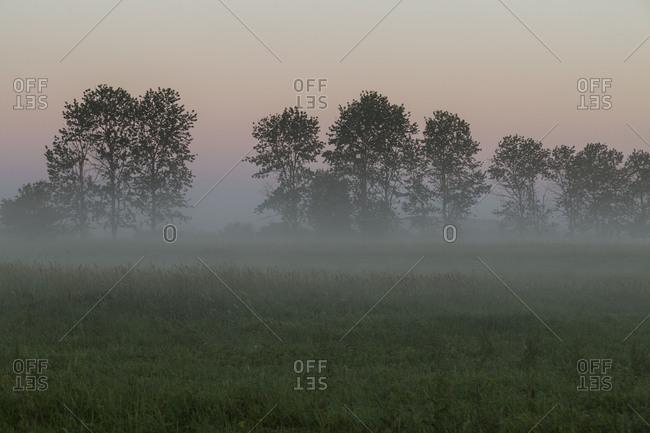Europe, Poland, Podlaskie Voivodeship, Narew river Gielczyn