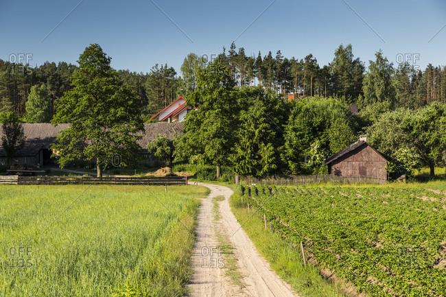 Europe, Poland, Podlaskie Voivodeship, Knyszynska Forest
