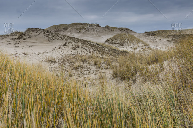 Europe, Poland, Pomerania, Moving dunes in the Slowinski National Park