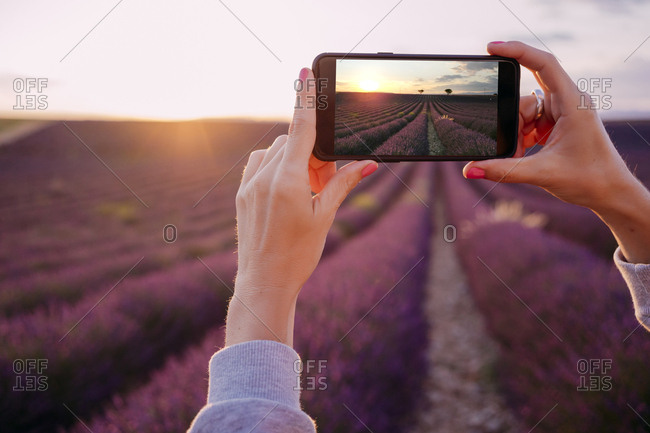 France- Valensole- woman's hands taking photo of lavender field at sunset