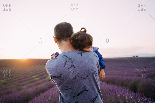 France- Valensole- back view of father holding his little daughter in front of lavender field at sunset