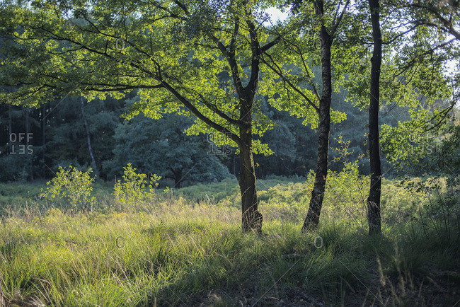 Sunshine in a clearing in a forest