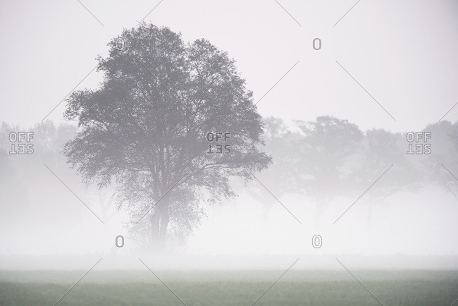 Tree surrounded by fog in a field