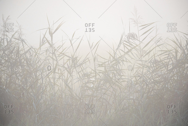 Plants surrounded by fog in a field