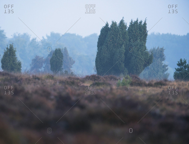 Forest and field landscape