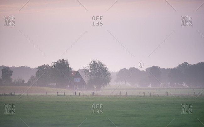 Foggy farmland