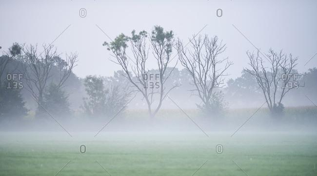 Foggy rural landscape