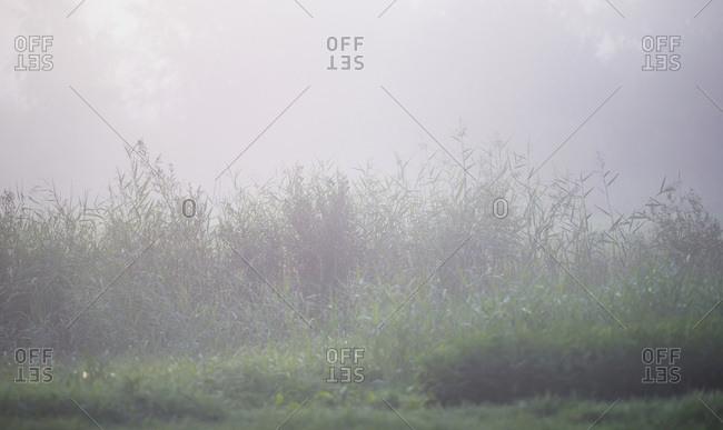 Plants in a foggy field
