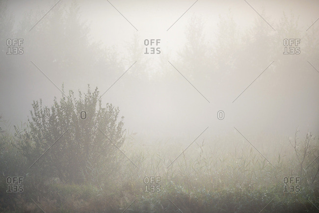 Foggy field and forest