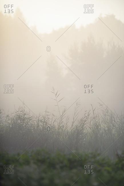 Plants growing in a foggy field