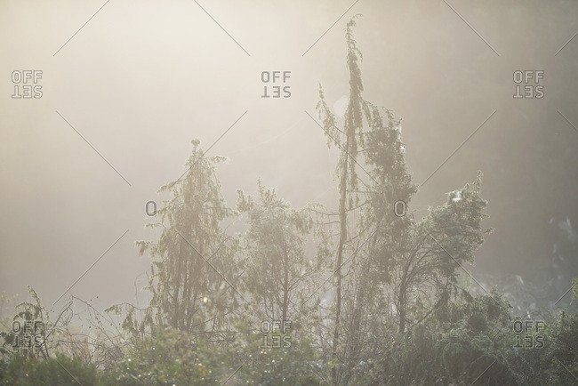 Plants growing in a foggy forest