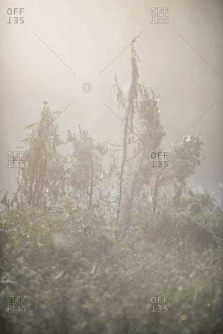 Plants in a foggy forest