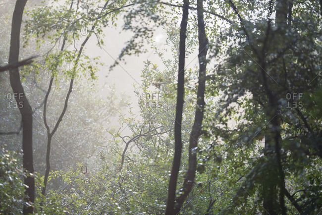 Sunshine in a foggy forest