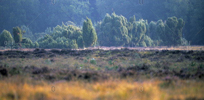 Panoramic view of trees in a forest