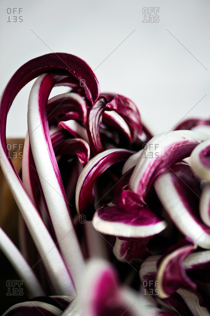 Radicchio leaves