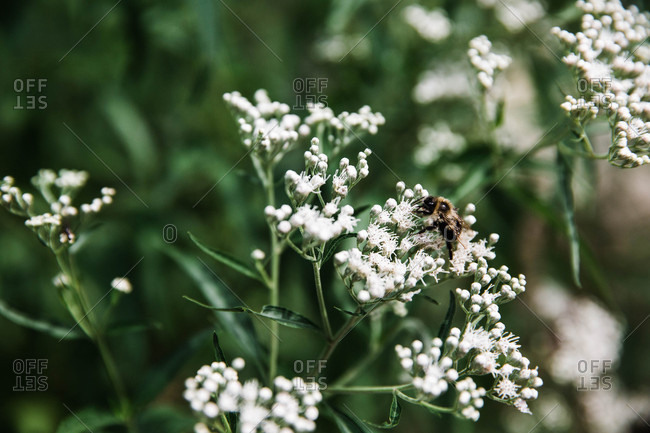 Bee on flower buds on a plant